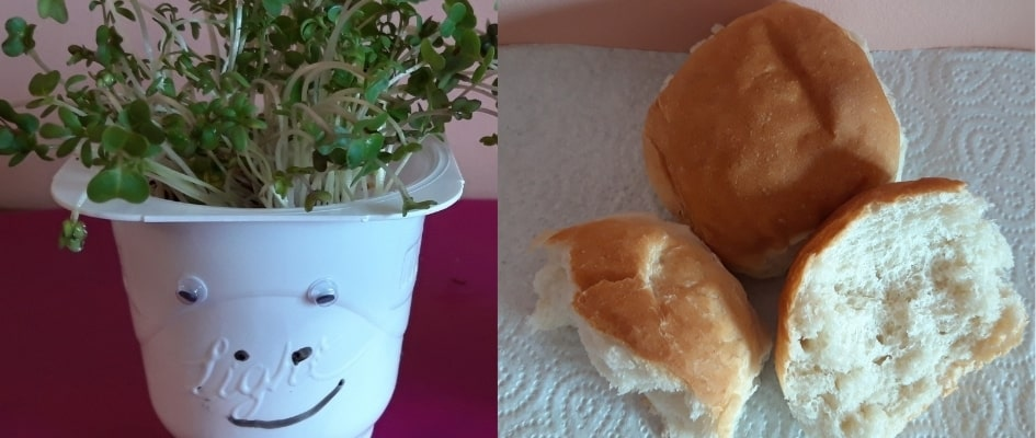 Pots of cress with faces on them and bread rolls