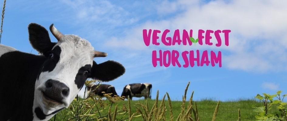 Cow in a field Vegan Fest Horsham