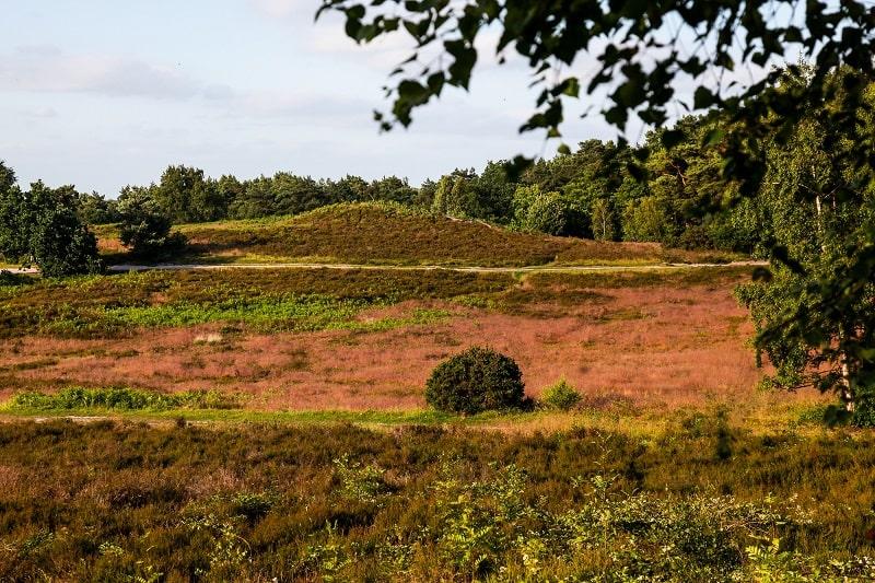 Sullington Warren heather beds